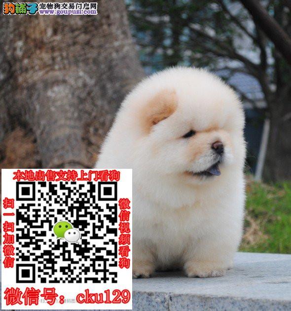 湖南株州宠物狗市场_买卖出售领养转让