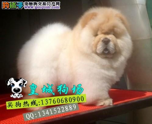 佛山顺德区什么地方有卖松狮犬多少钱一只