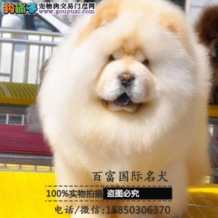 基地直销高品质松狮犬、保健康保纯种、签售后协议