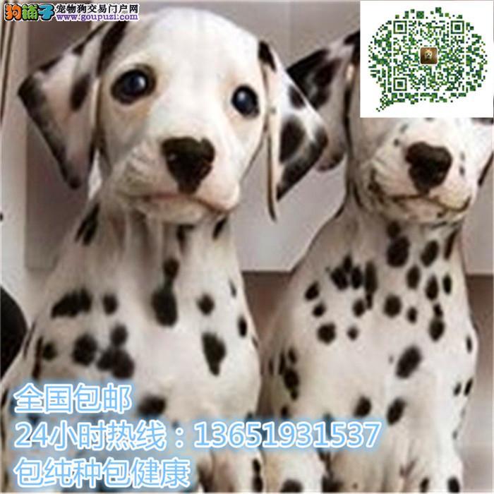 养殖场直销斑点幼犬包养活签协议上门可选