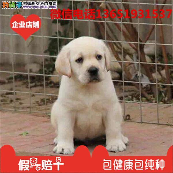 养不死才是王道 名宠基地直销中亚牧羊犬 保健康送用品