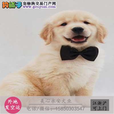 cku犬舍直销世界名犬全国包邮货到付款xkd