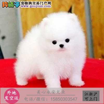 cku犬舍直销世界名犬全国包邮货到付款zc0