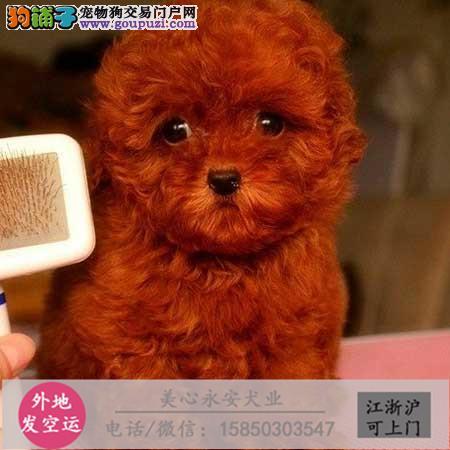 cku犬舍直销世界名犬全国包邮货到付款x0