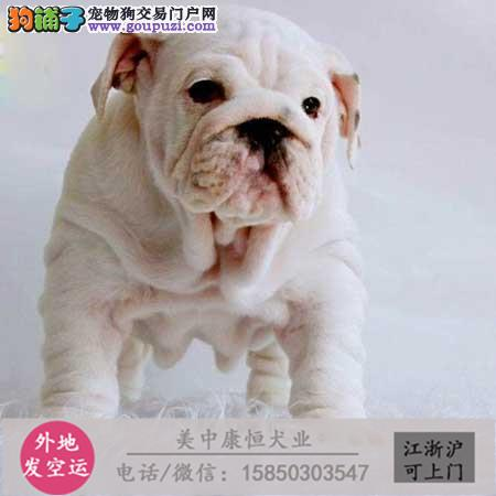 cku犬舍直销世界名犬全国包邮货到付款f236