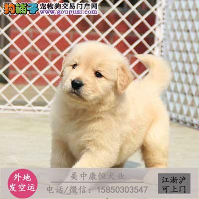 金毛幼犬价格合理、疫苗做好、常年营业、现场可选