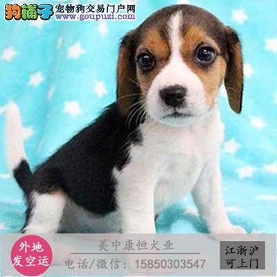 cku犬舍直销世界名犬全国包邮货到付款x2c1