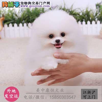 cku犬舍直销世界名犬全国包邮货到付款s5