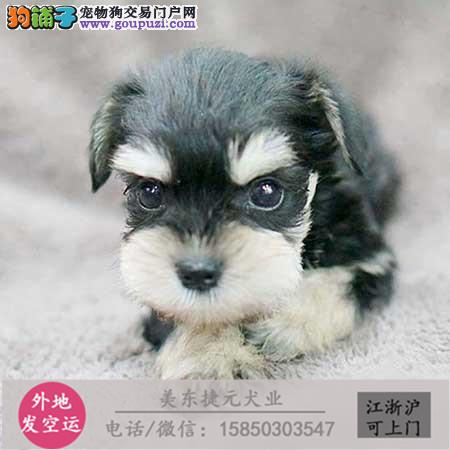cku犬舍直销世界名犬全国包邮货到付款
