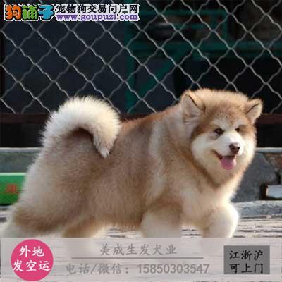 cku犬舍直销世界名犬全国包邮货到付款141