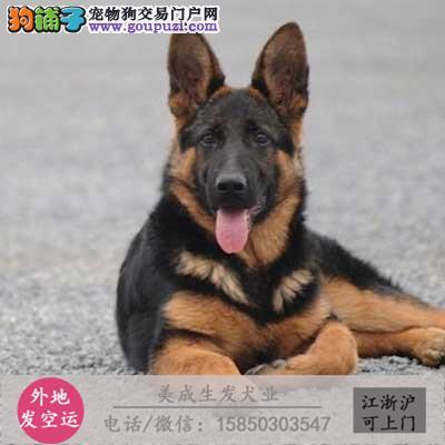 cku犬舍直销世界名犬全国包邮货到付款zc