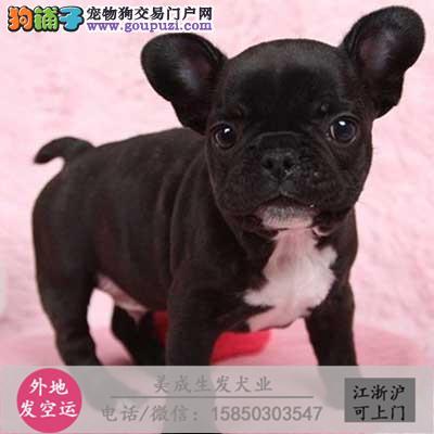 cku犬舍直销世界名犬全国包邮货到付款212