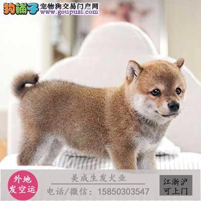 cku犬舍直销世界名犬全国包邮货到付款321