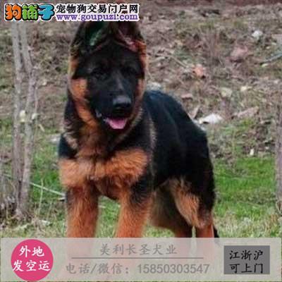 cku犬舍直销世界名犬全国包邮货到付款dsa6