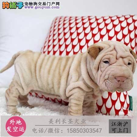 cku犬舍直销世界名犬全国包邮货到付款cxxc