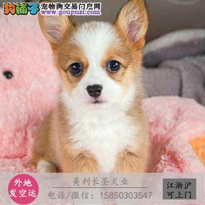 cku犬舍直销世界名犬全国包邮货到付款kjg