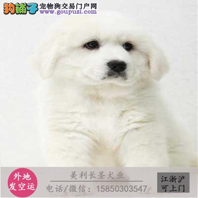 Q cku犬舍直销世界名犬全国包邮货到付款b