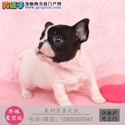 cku犬舍直销世界名犬全国包邮货到付款ZWA
