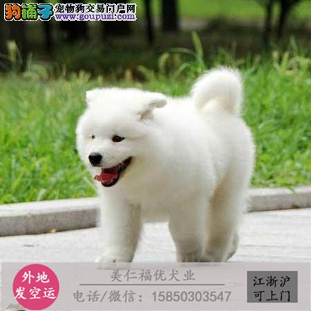 cku犬舍直销世界名犬全国包邮货到付款3z