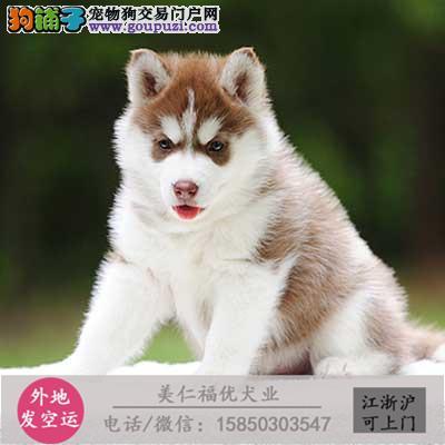 cku犬舍直销世界名犬全国包邮货到付款bhfv