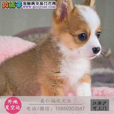 cku犬舍直销世界名犬全国包邮货到付款csdsd