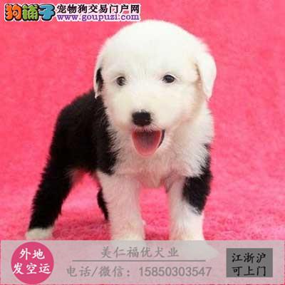 cku犬舍直销世界名犬全国包邮货到付款vkjghn