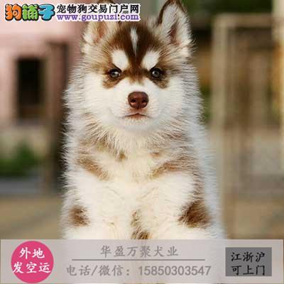 cku认证犬舍出售斑点狗 签协议保健康