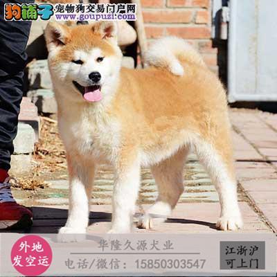大型犬舍专业繁殖 秋田幼犬现60多只货到付款2