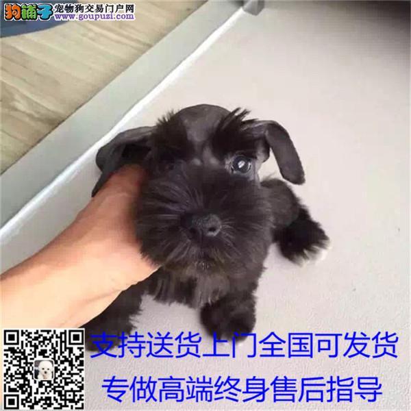 放心犬商家签署协议赠送新生犬礼包支持送.