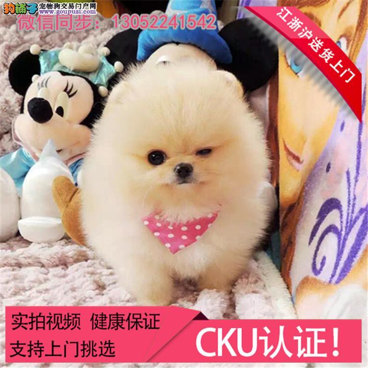 CKU认证犬舍出售纯种博美 博美幼犬 终身质保 /.*