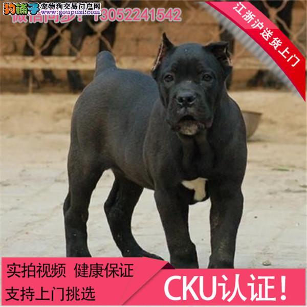 犬舍长期繁殖纯种其他狗狗犬包健康包纯种可上门+