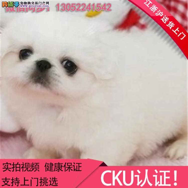 犬舍直销纯种中亚牧羊宝宝 CKU认证绝对信誉