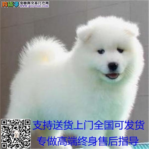 犬舍长期繁殖各种纯种名犬cku认证可上门