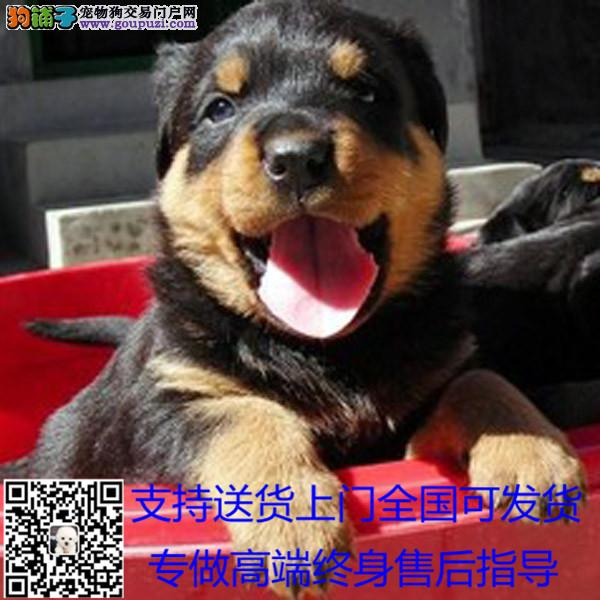 犬舍长期出售繁殖各种大小型宠物狗狗 可上门*