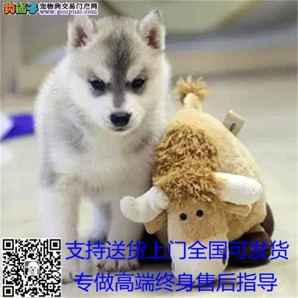 长期繁殖纯种伯恩山犬 各类纯种名犬 包养活签协议¥