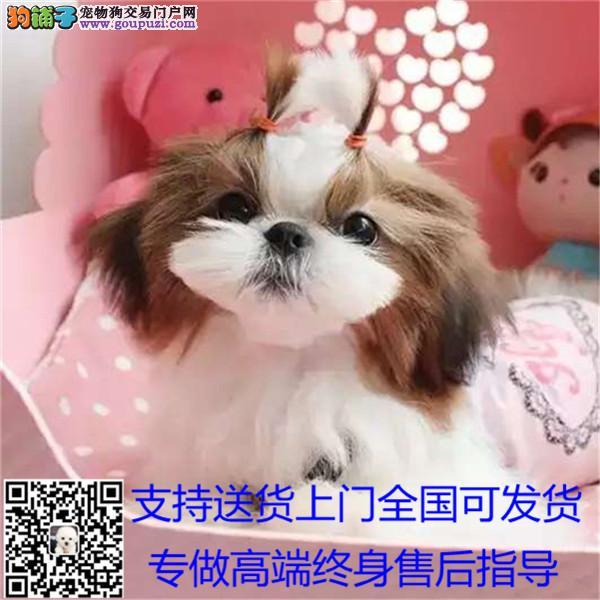 漂亮的狗狗 小型伴侣犬 适合居家的西施小狗包邮¥