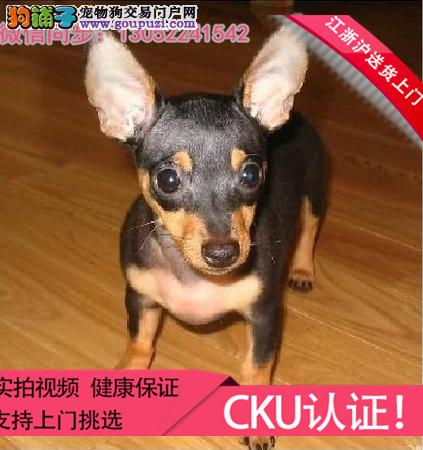 犬舍长期繁殖各种纯种宠物狗狗可上门挑选包邮