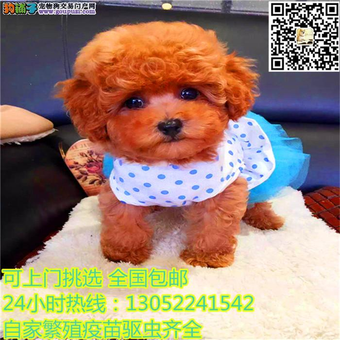 长期繁殖可爱玩具体泰迪 各类纯种名犬 包养活签协议