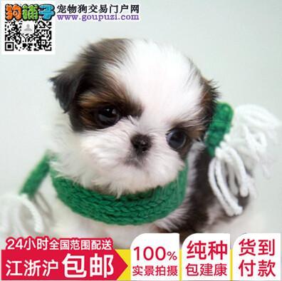 上海蝴蝶犬多少钱质保协议