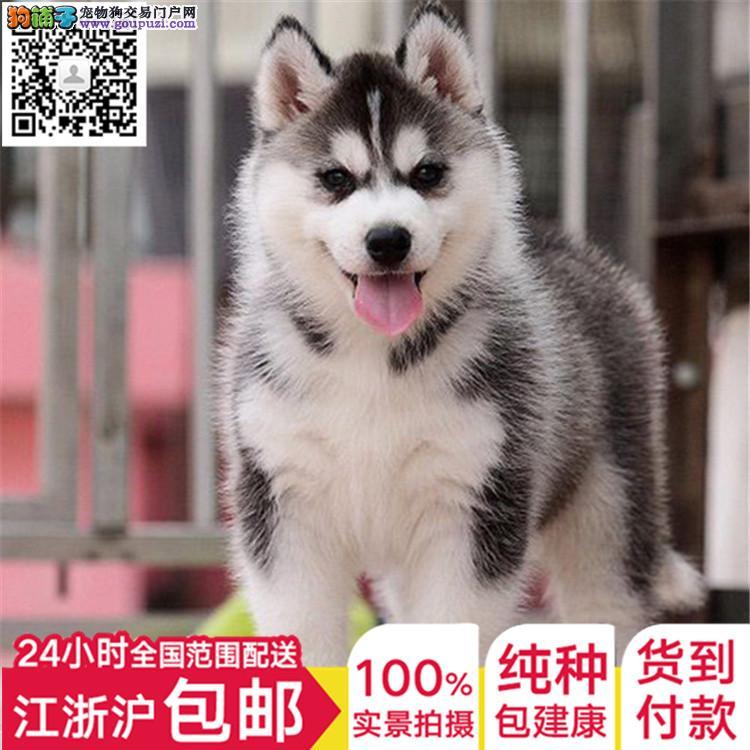 养殖场专业出售各类中型犬 包健康 全国包邮