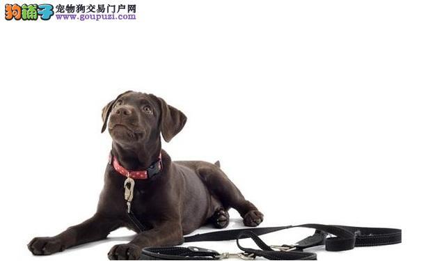 如何给狗狗选择合适的项圈