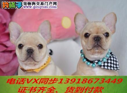 本地犬舍出售纯种法斗 包养活签协议可送货上门!