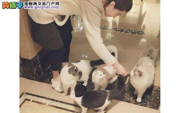 范冰冰喜欢加菲猫 李晨就先搞定她的猫咪