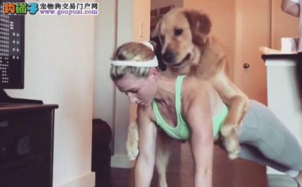 狗狗误把主人做运动当游戏 撒欢捣蛋惹人爱