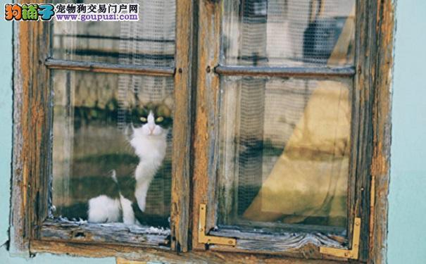 猫狗纯情故事太可爱 主人立即弥补无心之过