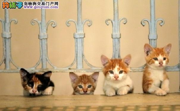 猫咪成为居民生活的一部分 伊斯坦堡爱猫之城