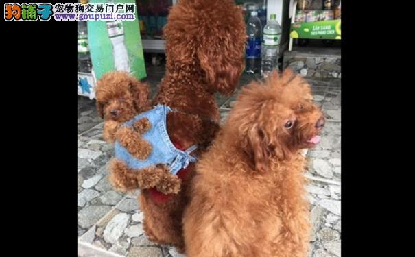 背着狗的狗 背着猫的猫 路遇它们你会走不动道