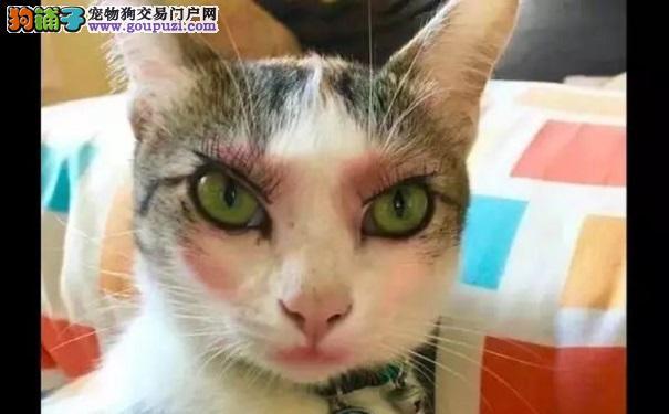 网友给猫咪化了妆 这面容表情好妩媚呀