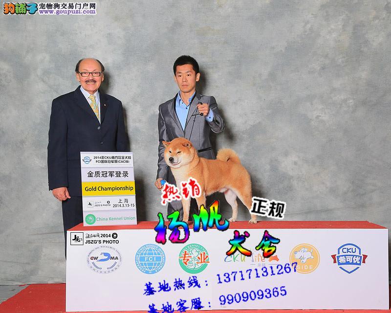 深圳什么地方买柴犬好 深圳到哪里买柴犬健康 扬帆犬业
