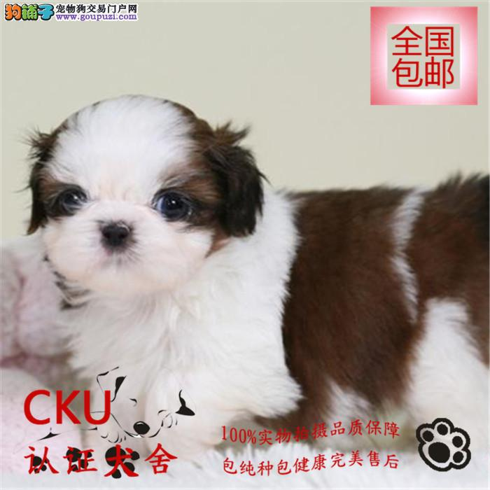 CKU认证犬舍出售极品西施犬 终身包售后 买狗送用品